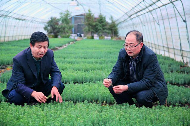 壁纸 成片种植 风景 植物 种植基地 桌面 639_426