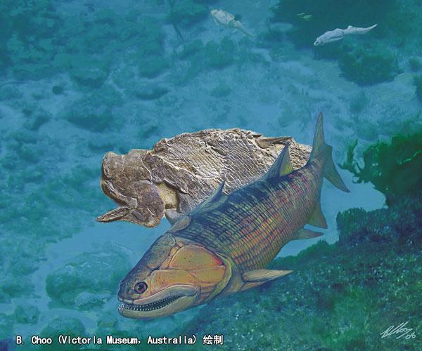 作为最古老的完整保存的硬骨鱼类乃至有颌脊椎动物化